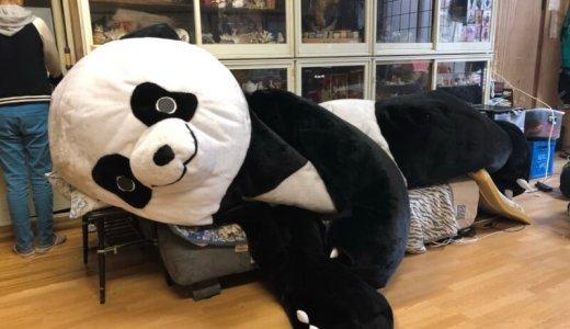 アンドレザジャイアントパンダが上野に!プロレス大賞新人賞も狙える?